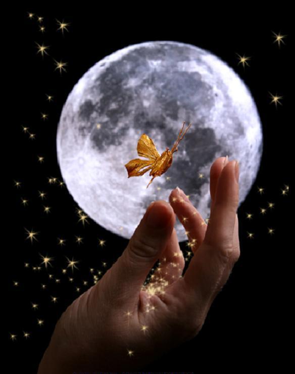Risultati immagini per stelle farfalla notte